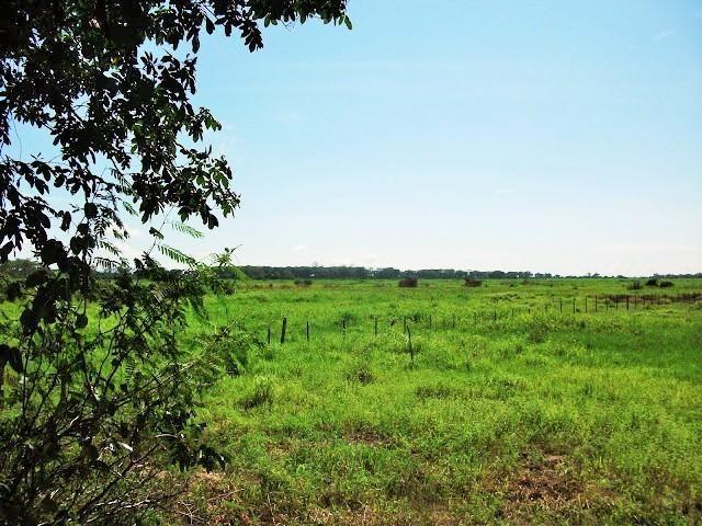 Excelente Fazenda no Pantanal do Mato Grosso do Sul - Foto 3