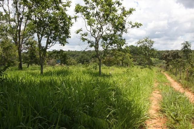 Sítio de 3 hectares 30.000m² por 100.000,00 - Foto 16