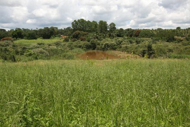 Sítio de 3 hectares 30.000m² por 100.000,00 - Foto 5