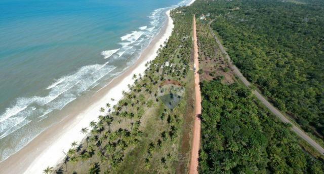Terreno à venda, 117242 m² por r$ 3.100.000 - aritaguá - itacaré/ba - Foto 5