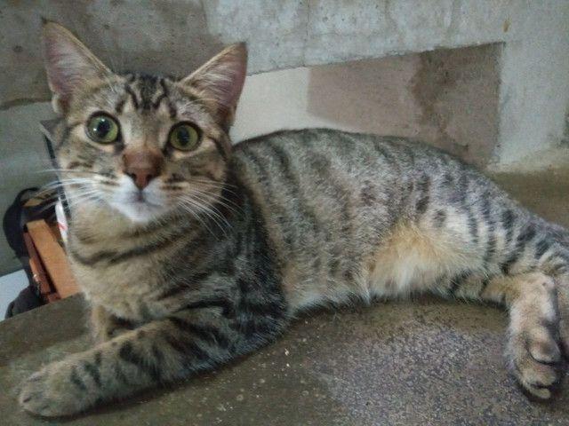 adoção de gatos  - Foto 5