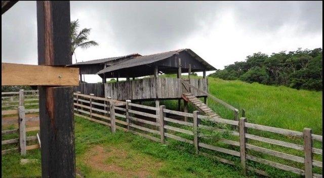 Vendo Excelente fazenda 95 hectares 36 Km de Porto Velho - Foto 5