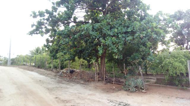 Vendo linda granja em pombal