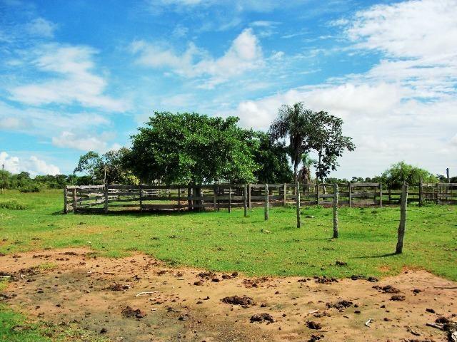 Excelente Fazenda no Pantanal do Mato Grosso do Sul - Foto 12