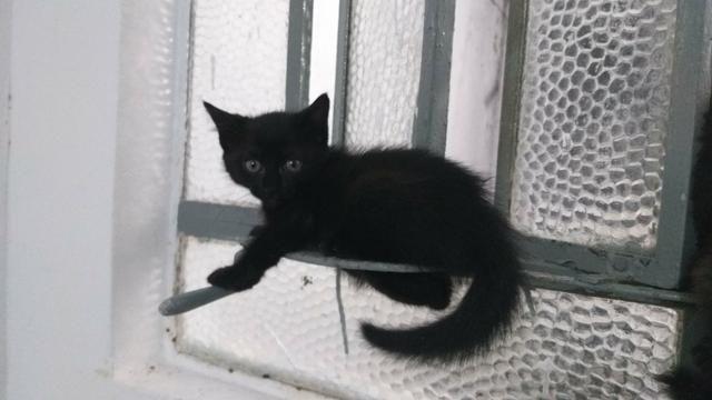 Gatinhos para adoção responsável e amorosa urgente! - Foto 5