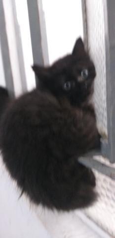 Gatinhos para adoção responsável e amorosa urgente! - Foto 4