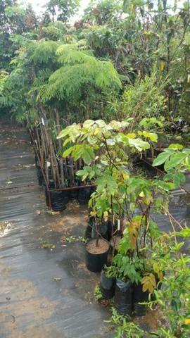 Plantas nativas para reflorestamento