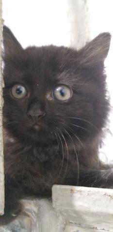 Gatinhos para adoção responsável e amorosa urgente! - Foto 3