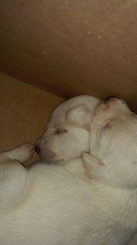 Cachorros para doar - Foto 6