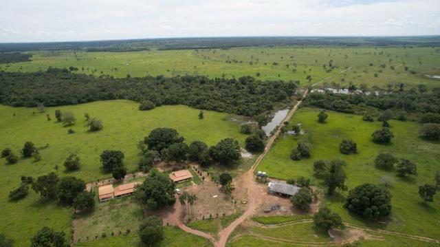 Fazenda Lagoa da Confusão - TO - 2.876 Hectares
