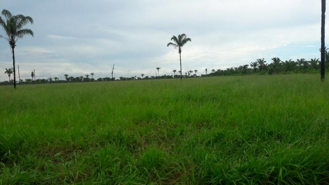Fazenda no Pará - Foto 12