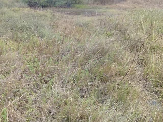 Pombos-Vend. 480 mil reais-Tem 120 Hect. Fazenda Completa,Água,Pastos, e mais - Foto 12