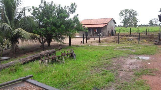Fazenda no Pará - Foto 3