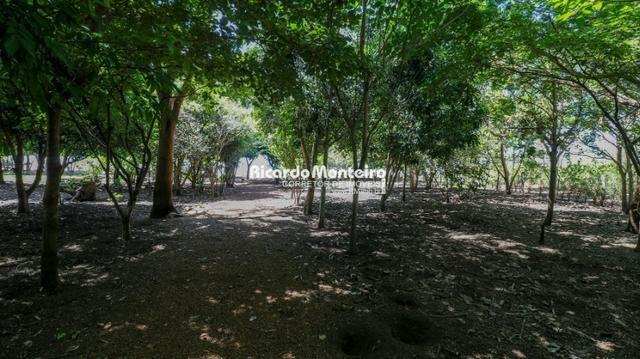 Chácara na beira do lago, pronta para morar a 22km do centro de Palmas - Foto 15