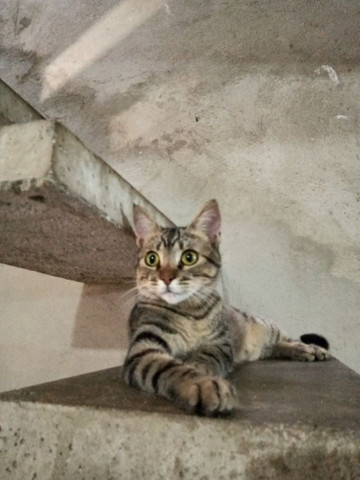 adoção de gatos  - Foto 6