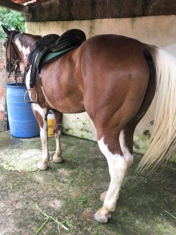 Cavalo vaquejada  - Foto 6