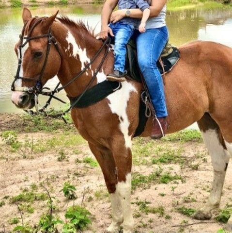 Cavalo vaquejada  - Foto 5