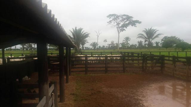 Fazenda no Pará - Foto 10