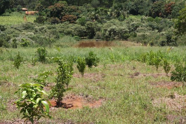 Sítio de 3 hectares 30.000m² por 100.000,00 - Foto 6