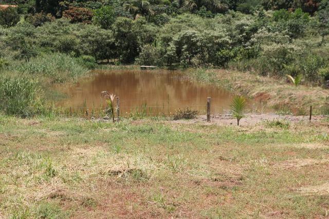 Sítio de 3 hectares 30.000m² por 100.000,00 - Foto 4