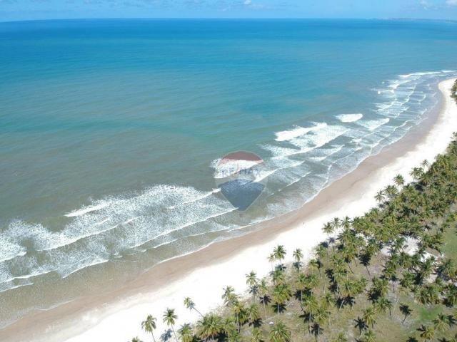 Terreno à venda, 117242 m² por r$ 3.100.000 - aritaguá - itacaré/ba - Foto 2