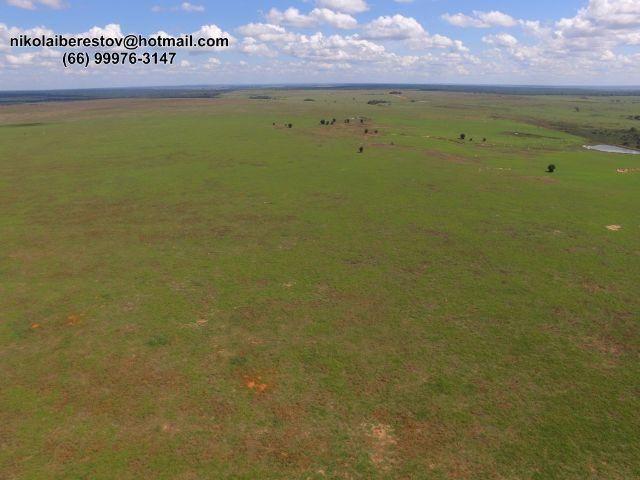 Fazenda Arrenda 4.900 hectares nordeste mt nikolaiimoveis
