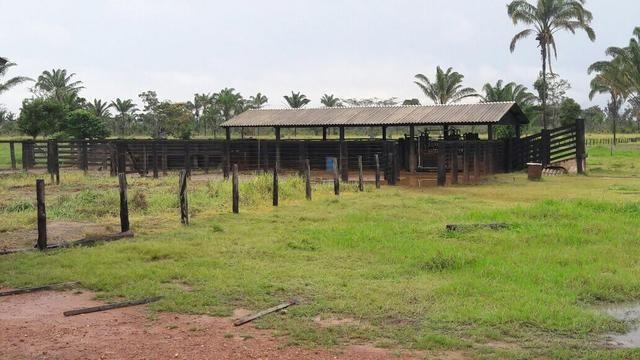 Fazenda no Pará - Foto 2
