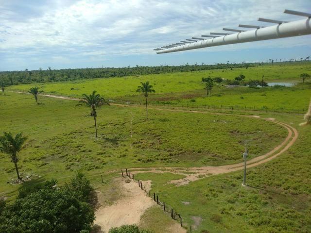Fazenda no Pará - Foto 14