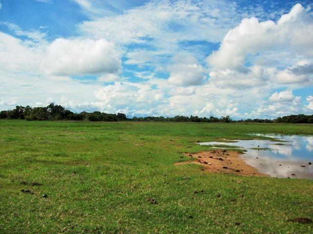 Excelente Fazenda no Pantanal do Mato Grosso do Sul - Foto 7