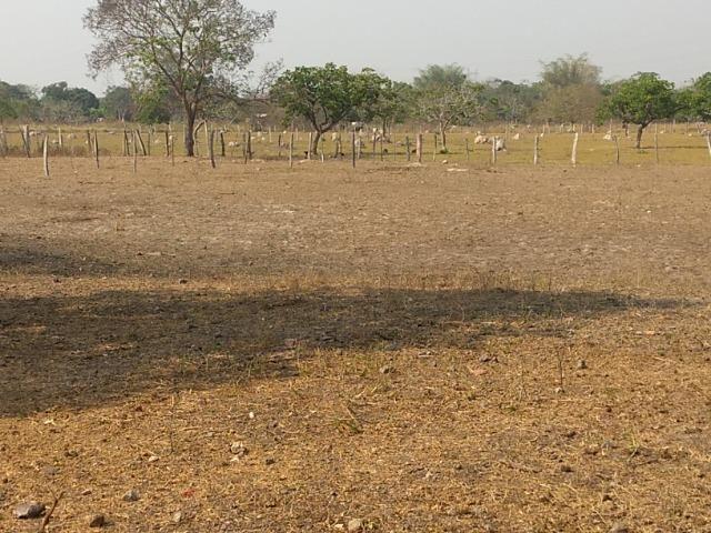 Chácara 2.5 ha, linha 16 cinturão verde - Foto 16