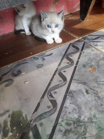 Doações de gatos  - Foto 4