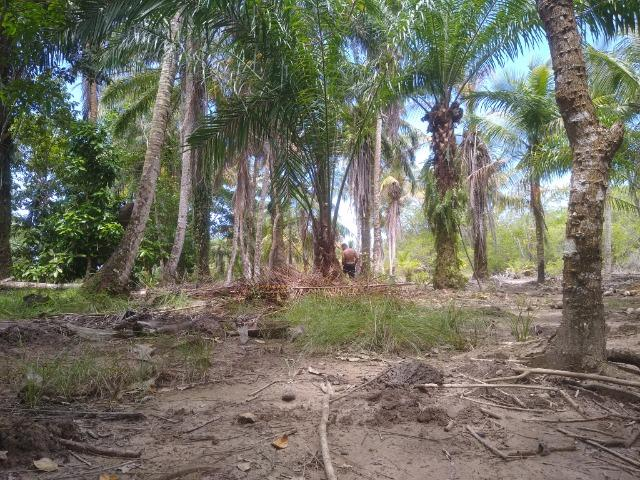 Venda Sítio as margens do Rio de Contas - Foto 10