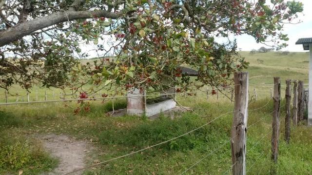 Sairé=Vend-25 mil por Hect. Fazenda com 200 Hectares-Pronta pra Criar Gado - Foto 17