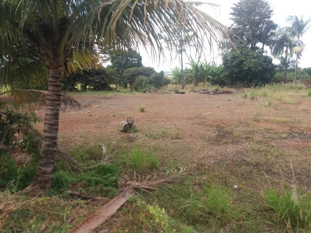 Locação - Chácara próximo à Av. Saul Elkind, 5000 m² com casa sede - Londrina/PR - Foto 11