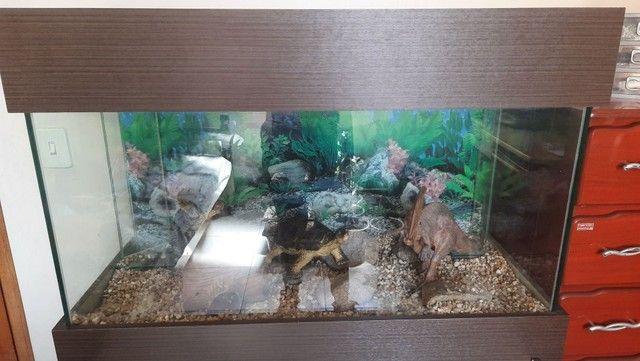 Aquário Autociclante com armário 200L - Foto 3