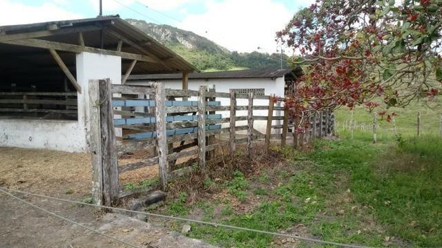 Sairé=Vend-25 mil por Hect. Fazenda com 200 Hectares-Pronta pra Criar Gado - Foto 16