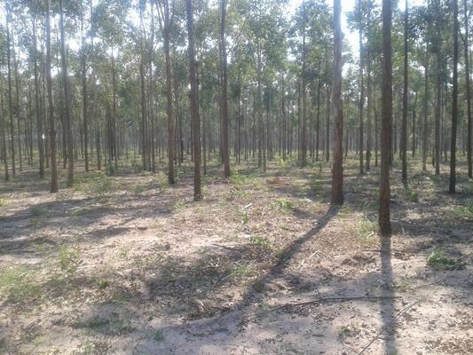 160 hectares,45 hectares eucaliptos, região de reserva do cabaçal- MT, Ocasião - Foto 5
