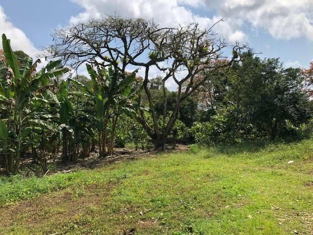 Vendo fazenda em Gandu BA - Foto 3