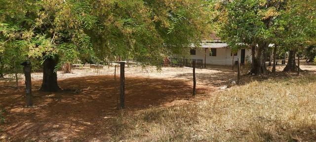 Fazenda Engenho Santa Rita 13 Alqueires - Foto 3