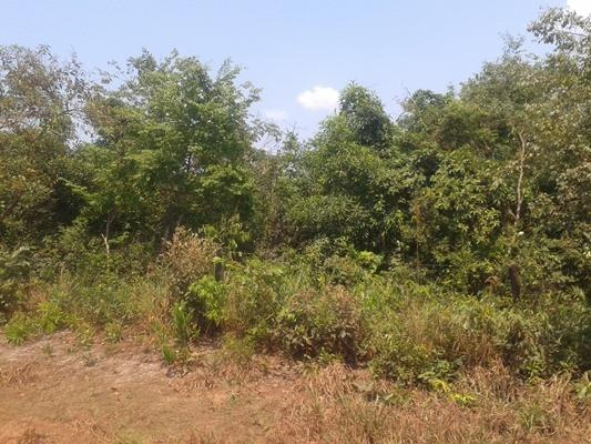 160 hectares,45 hectares eucaliptos, região de reserva do cabaçal- MT, Ocasião - Foto 9