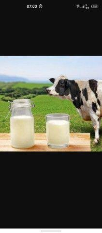 Vende se leite ,da colônia puro