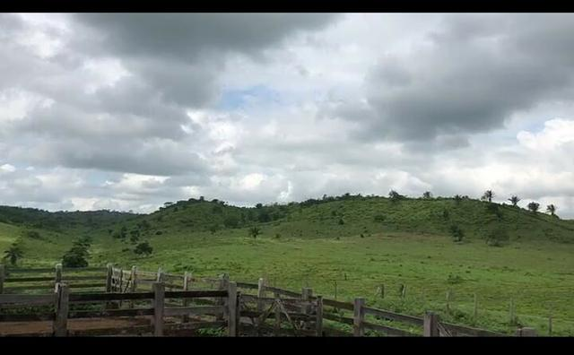 Vendo fazenda 300 alqueires (Margeando o Asfalto) - Foto 17