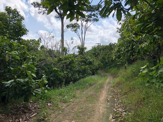 Vendo fazenda em Gandu BA - Foto 4
