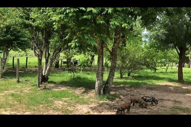 Vendo fazenda 300 alqueires (Margeando o Asfalto) - Foto 10