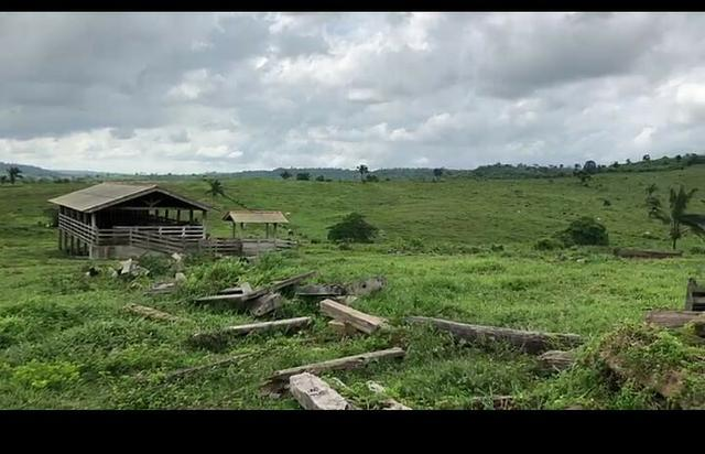 Vendo fazenda 300 alqueires (Margeando o Asfalto) - Foto 2