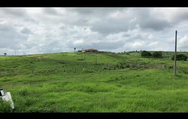 Vendo fazenda 300 alqueires (Margeando o Asfalto) - Foto 3