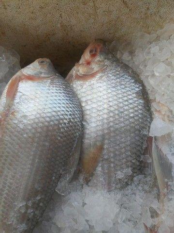 Peixe - Foto 2