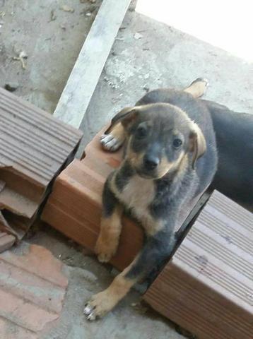 Cachorrinhos para doação. cadelas lindas