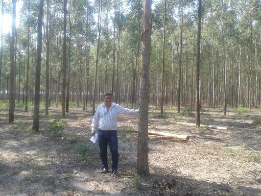 160 hectares,45 hectares eucaliptos, região de reserva do cabaçal- MT, Ocasião - Foto 6