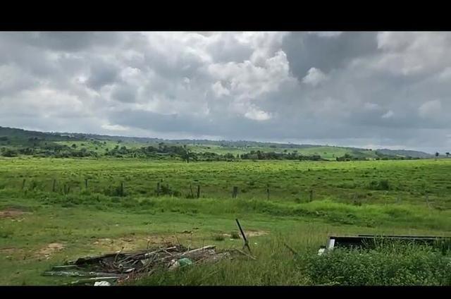 Vendo fazenda 300 alqueires (Margeando o Asfalto) - Foto 4